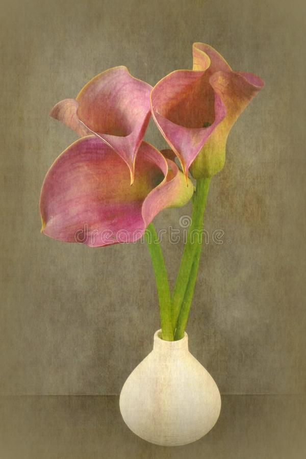 calla vektor illustrationer