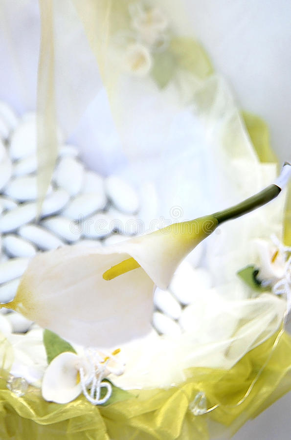 Calla bloeit lilly stock afbeeldingen