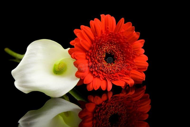 Calla branco e flores vermelhas de Gerber foto de stock royalty free