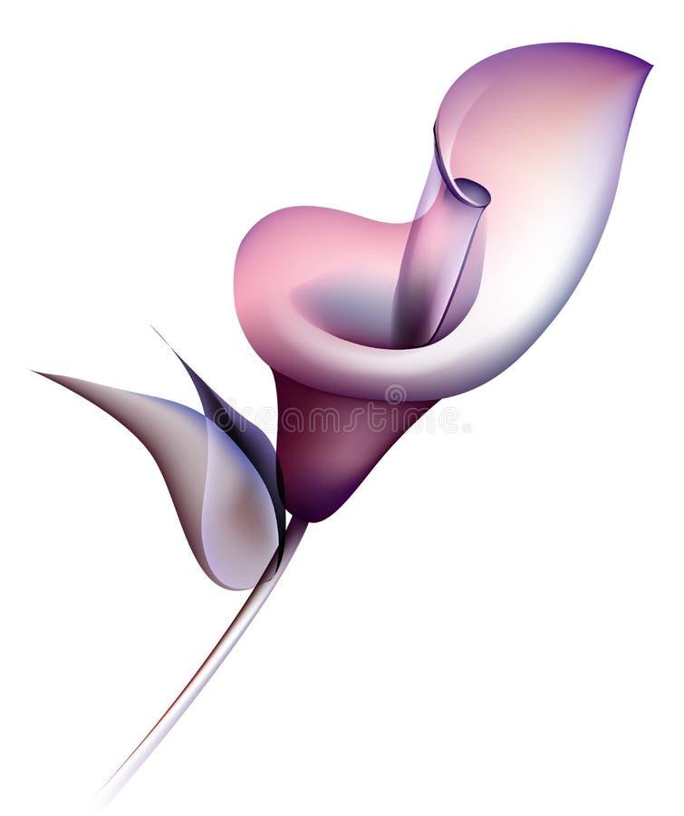 Calla-Lilie lizenzfreie abbildung