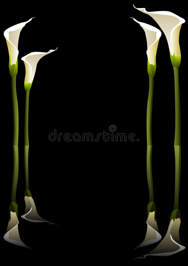 Download Calla lilies stock vector. Illustration of lillies, vector - 3970450