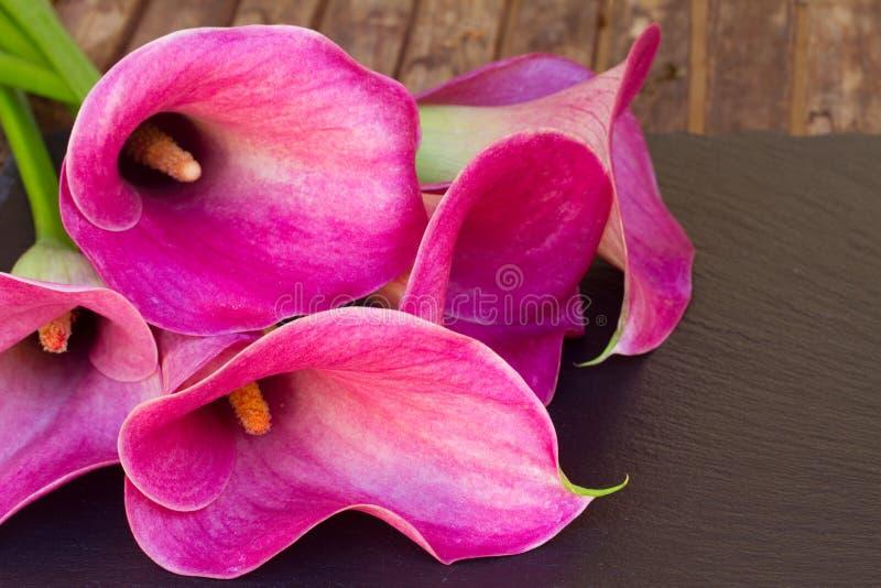 calla lilly стоковая фотография