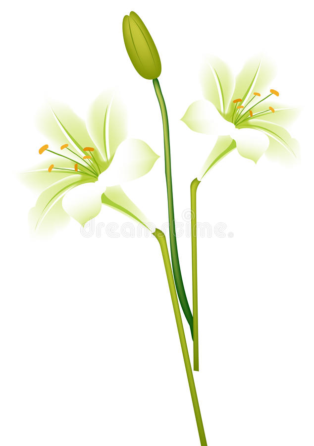 Download Calla Lily Stock Images - Image: 12172514