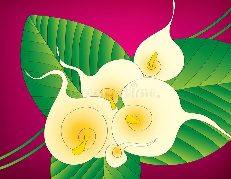 Calla lily floral background vector illustration