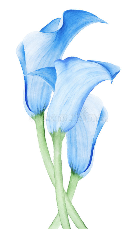 Calla Lily Flower Wedding Bouquet Stock Illustration Illustration
