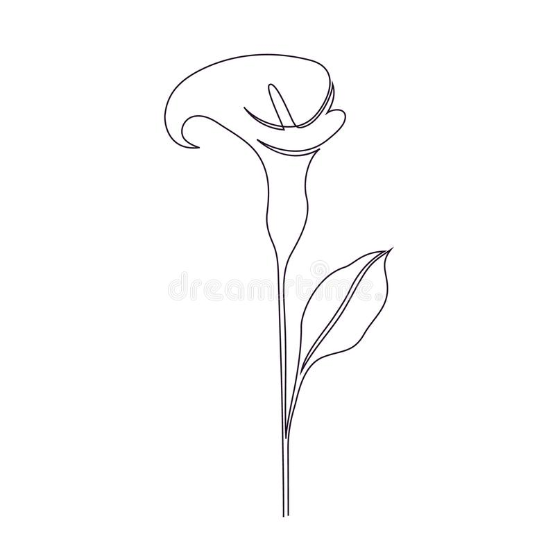 Calla lily flower royalty free illustration