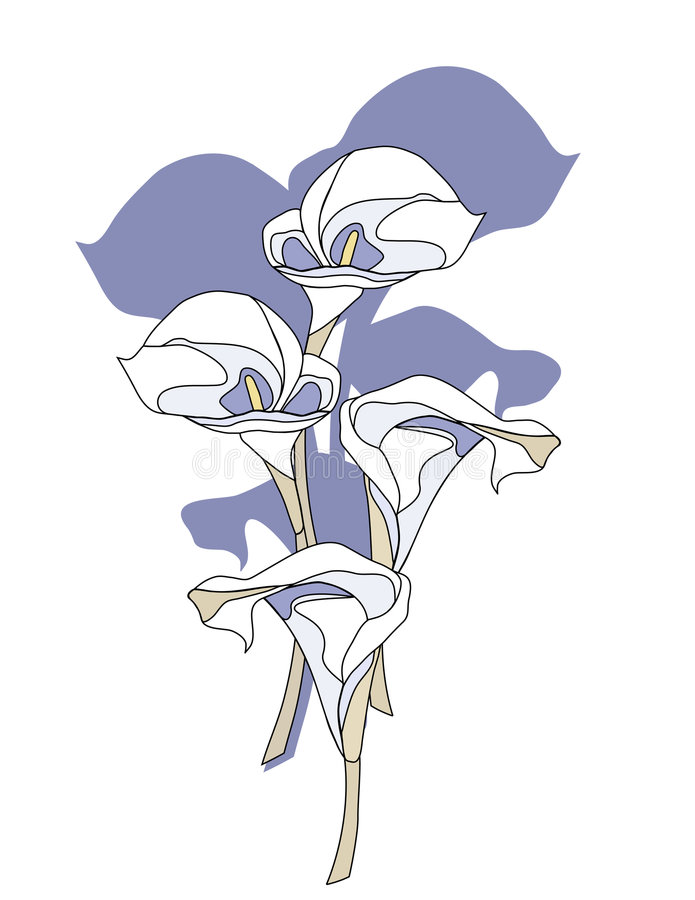 Download Calla Lily Flowers stock vector. Image of elegance, white - 5197666