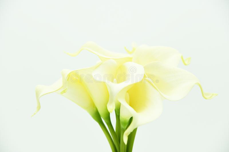 Calla Lily flowers and artificial stems. Various flowers of calla lily isolated on white. royalty free stock images