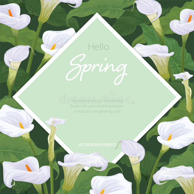 Calla Lily Flowers Frame On Green Background. Vector Set Of Blooming ...