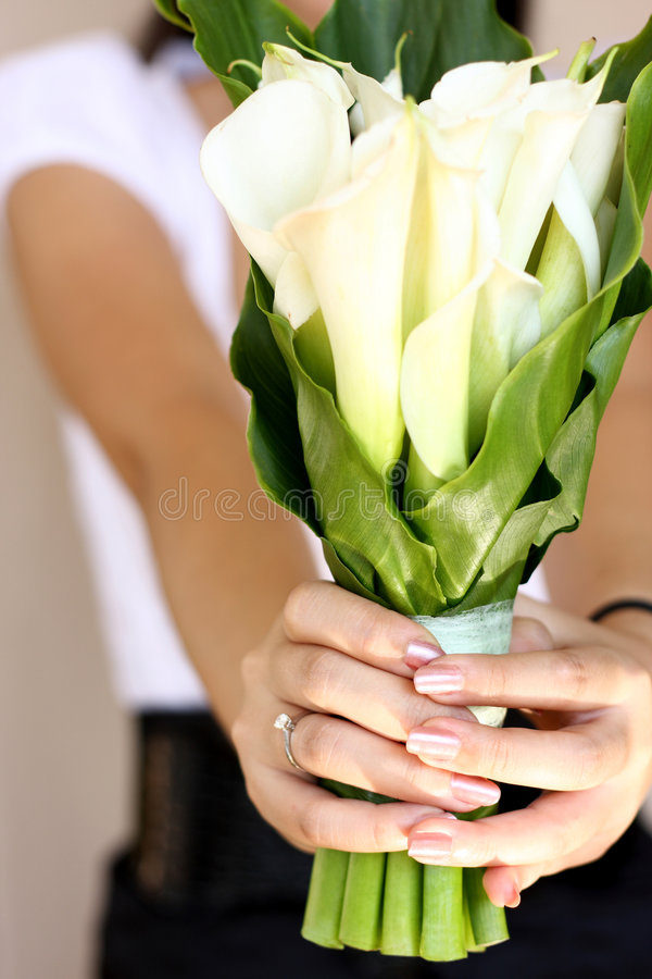 Download Calla Lily for you stock photo. Image of finger, lily - 8124164