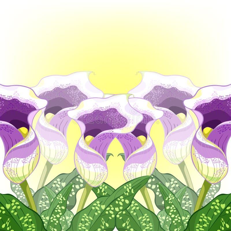 Calla Picasso en blommalila också vektor för coreldrawillustration royaltyfri illustrationer