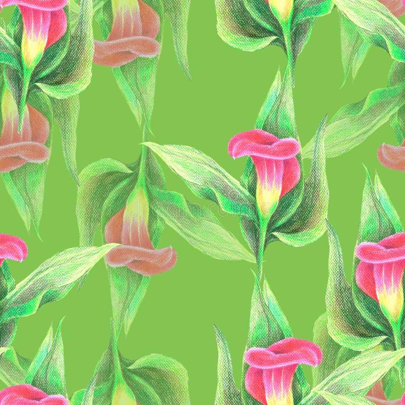 Calla sem emenda das flores do teste padrão no fundo do verde-lima ilustração stock