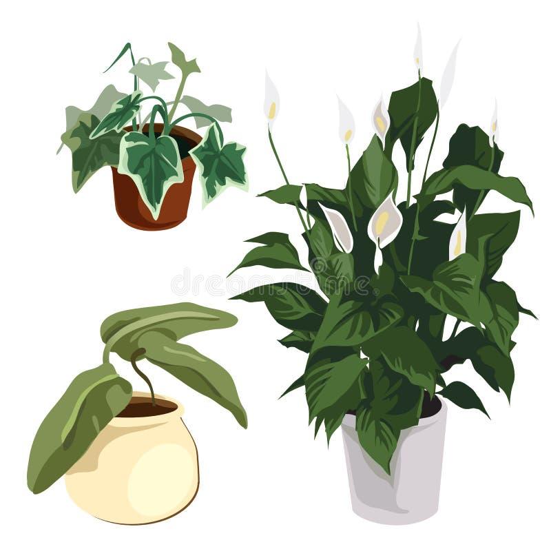 Callalilien und andere Zierpflanzen im Topf lizenzfreie abbildung