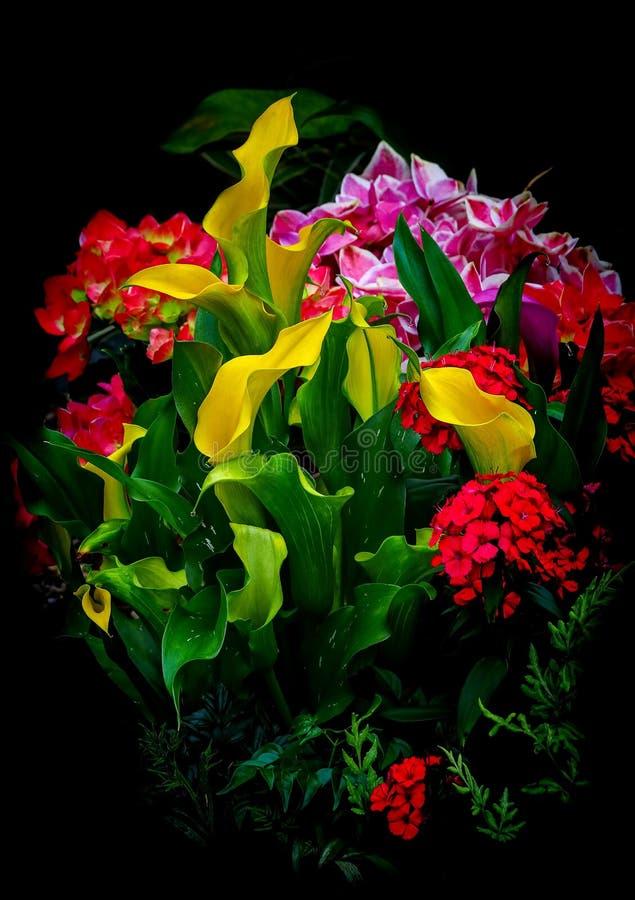 Callalilja och annan tropisk blommabakgrund fotografering för bildbyråer