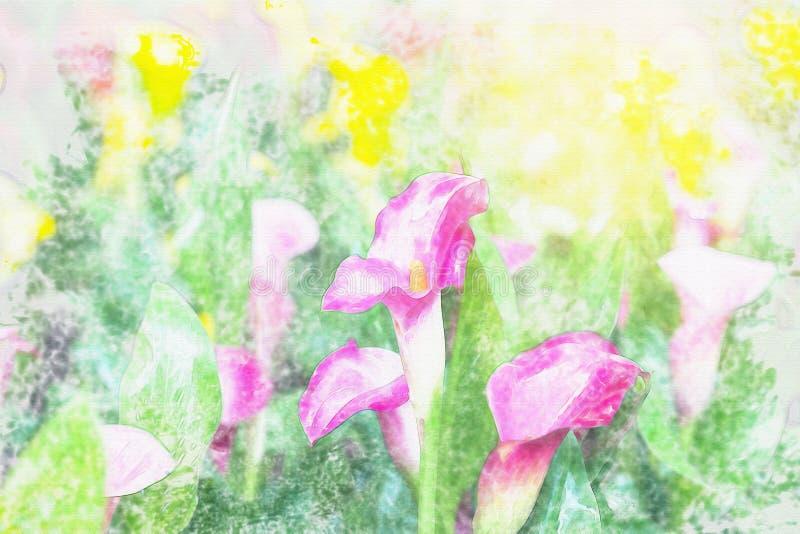 Callaliljan blommar vattenfärgen vektor illustrationer