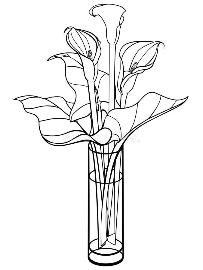 Callas i en vas Calla lilja med sidor blommar den glass vasen bukett Linje teckning För att färga vektor illustrationer
