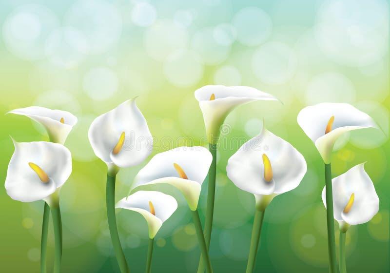 Callas no backgraund verde ilustração royalty free