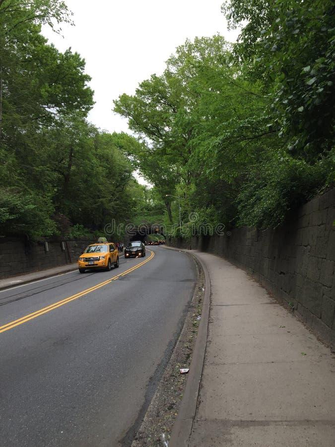 Calle alineada árbol que corre a través de Central Park fotos de archivo
