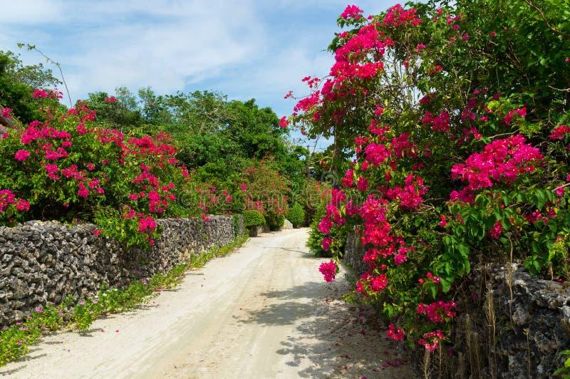 Calle blanca de la arena en la isla de Taketomi, Okinawa, Japón fotografía de archivo libre de regalías