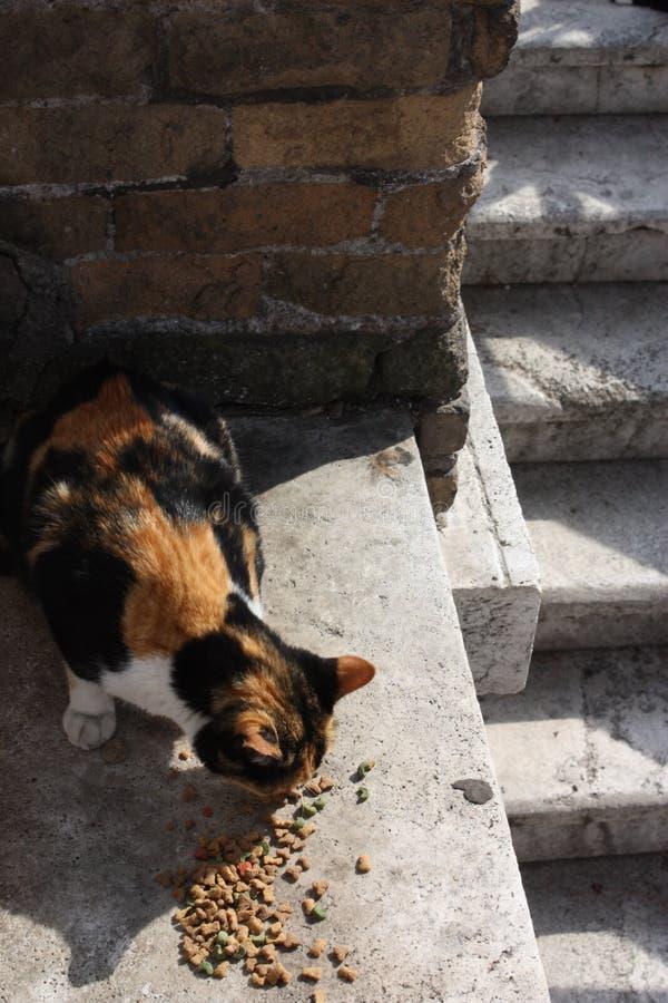 Calle Cat Eating Kibble en Roma, Italia fotos de archivo libres de regalías