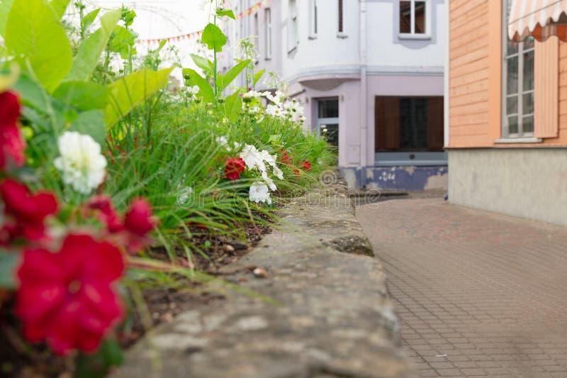 Calle colorida con las flores en Cesis, Letonia fotografía de archivo