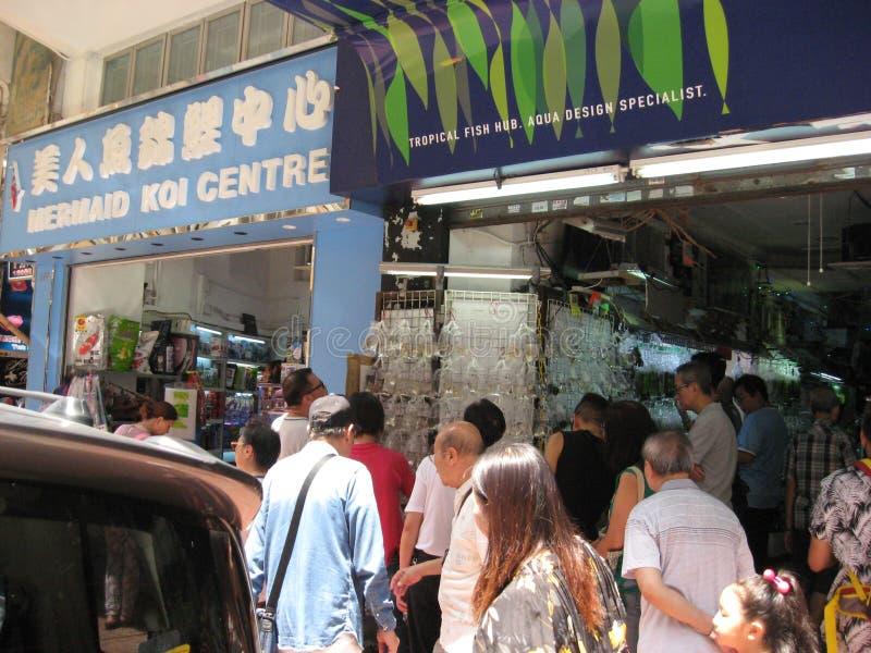 Calle con las tiendas de animales en Mong Kok, Hong Kong foto de archivo