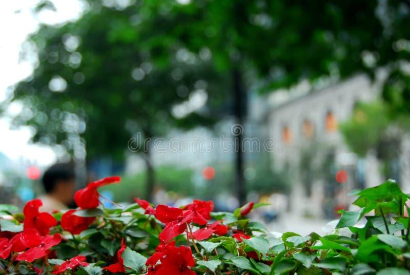 Calle de la ciudad fotos de archivo libres de regalías