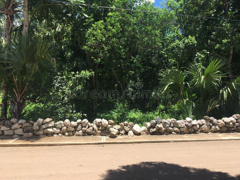 Calle de la selva fotos de archivo libres de regalías