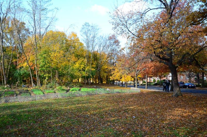 Calle de Yale Campus en caída imagenes de archivo