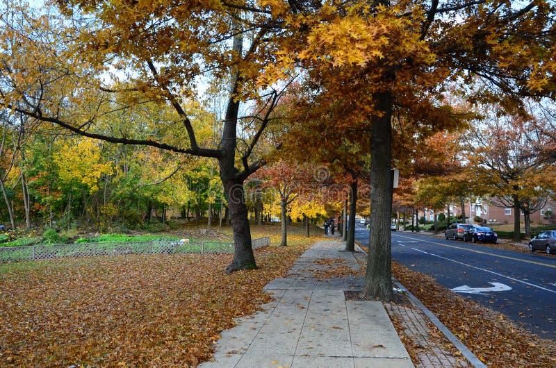 Calle de Yale Campus en caída imagen de archivo