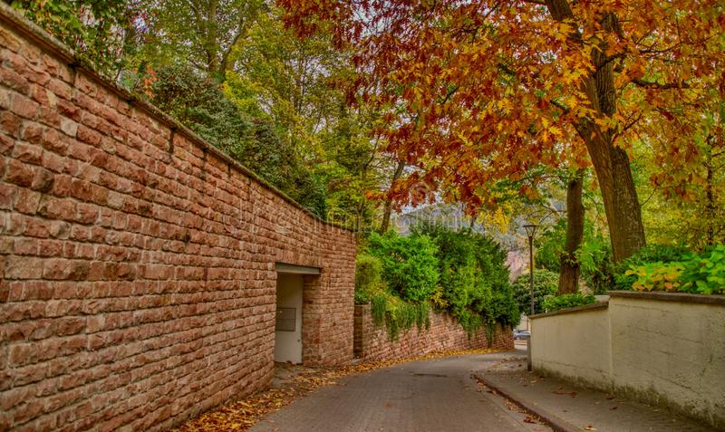 Calle del otoño con colores múltiples y líneas rectas fotos de archivo libres de regalías