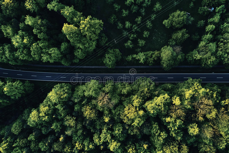 Calle entre los árboles grandes del top con la opinión aérea del abejón, paisaje imagenes de archivo