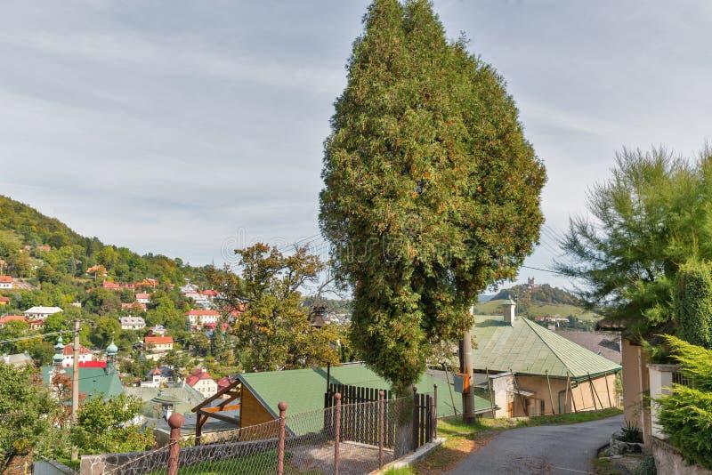 Calle estrecha en Banska Stiavnica, Eslovaquia fotografía de archivo