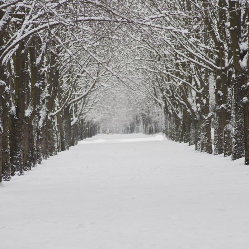 Calle nevada de la ciudad Estación del invierno Árboles cubiertos con nieve fotografía de archivo libre de regalías