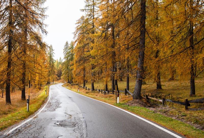 Calle rural vacía en las montañas alpinas italianas durante el otoño fotos de archivo