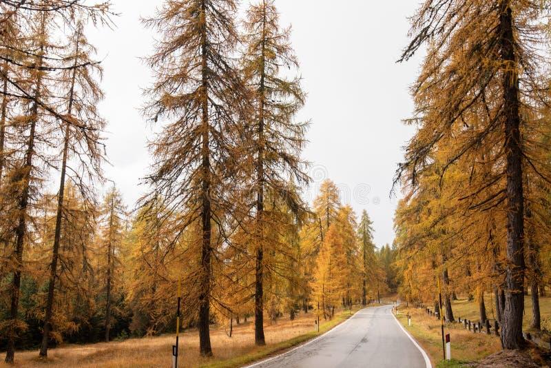 Calle rural vacía en las montañas alpinas italianas durante el otoño fotos de archivo libres de regalías