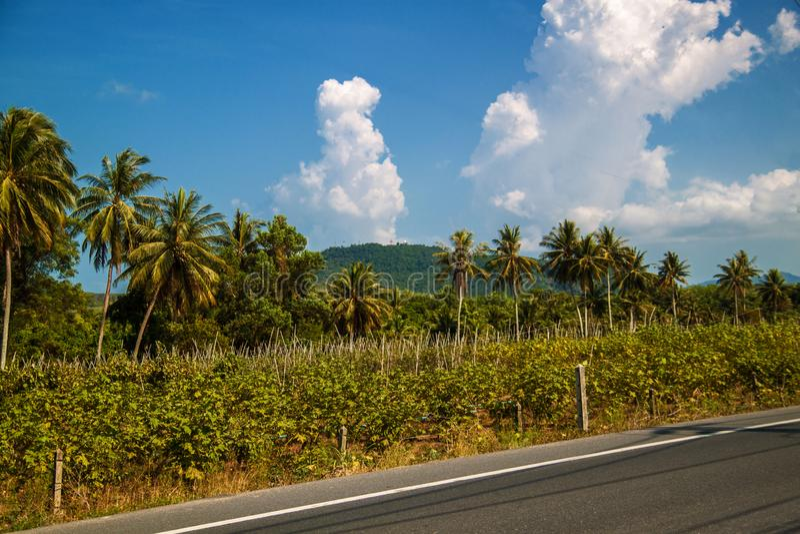 Calle vacía de la ciudad con las palmeras y el cielo azul, carretera de asfalto con las marcas, manera recta del automóvil fotos de archivo libres de regalías