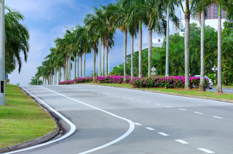 Calle vacía de la ciudad con las palmeras y las flores, carretera de asfalto con las marcas, maneras del automóvil de la vuelta imagenes de archivo