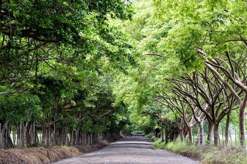 Callejón al parque nacional de Corcovado en Costa Rica fotos de archivo