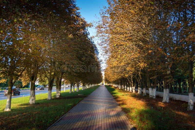 Callejón alineado con la foto de los árboles del otoño, composición de disminución de la perspectiva foto de archivo