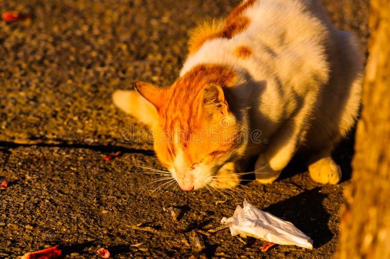 Callejón Cat Eating imagen de archivo