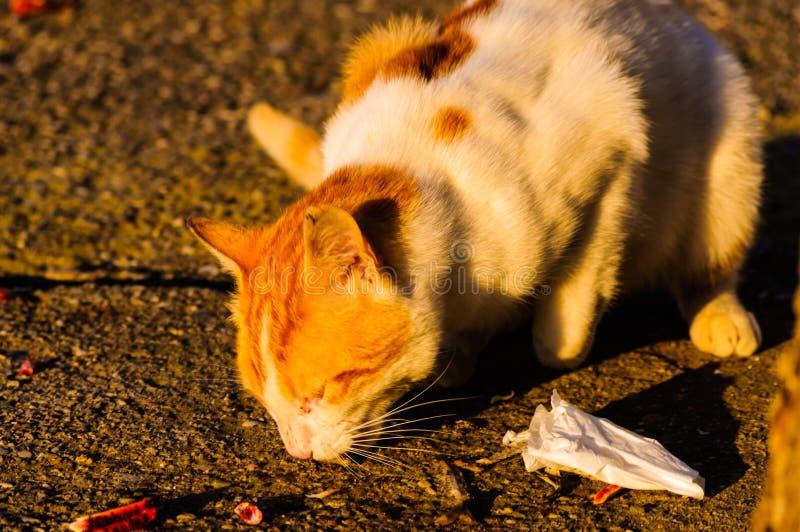 Callejón Cat Eating fotografía de archivo