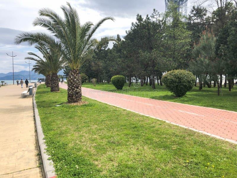 Callej?n con las palmeras verdes hermosas en un parque para relajarse y caminar en el centro tur?stico de verano caliente del mar imagen de archivo