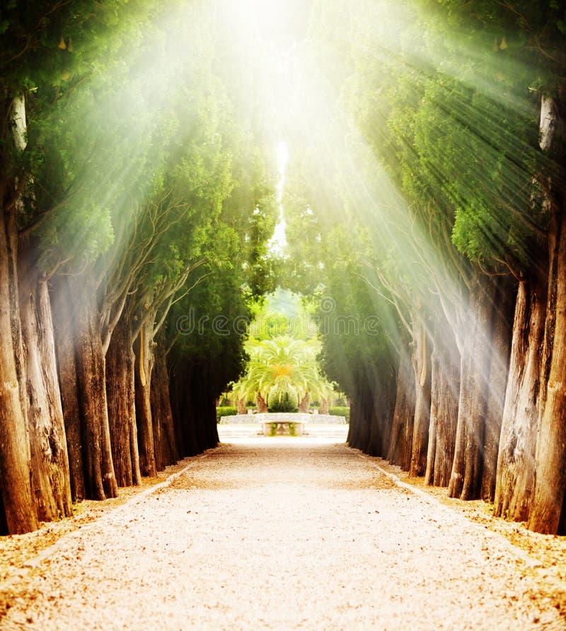 Callejón con los árboles centenarios bajo luz del sol foto de archivo libre de regalías