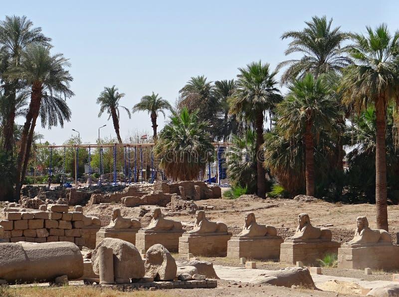 Callejón de esfinges en Luxor fotos de archivo