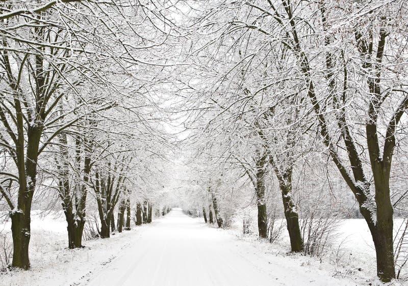Callejón de la nieve fotografía de archivo