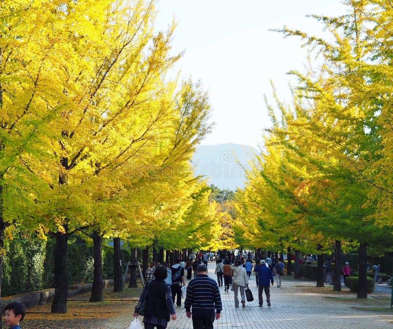 Callejón de los árboles del Gingko en parque japonés imagenes de archivo