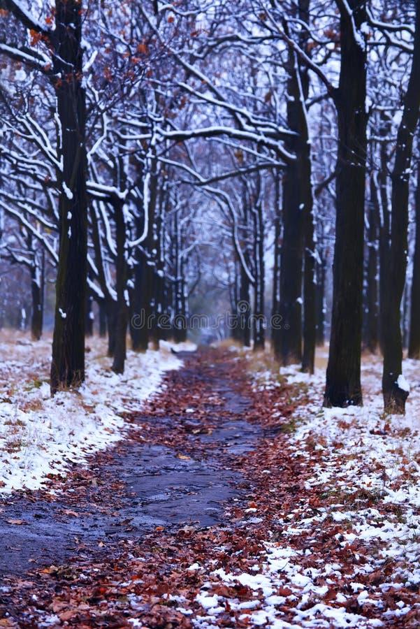 Callejón de robles en el parque a finales del otoño y de la nieve imagen de archivo libre de regalías