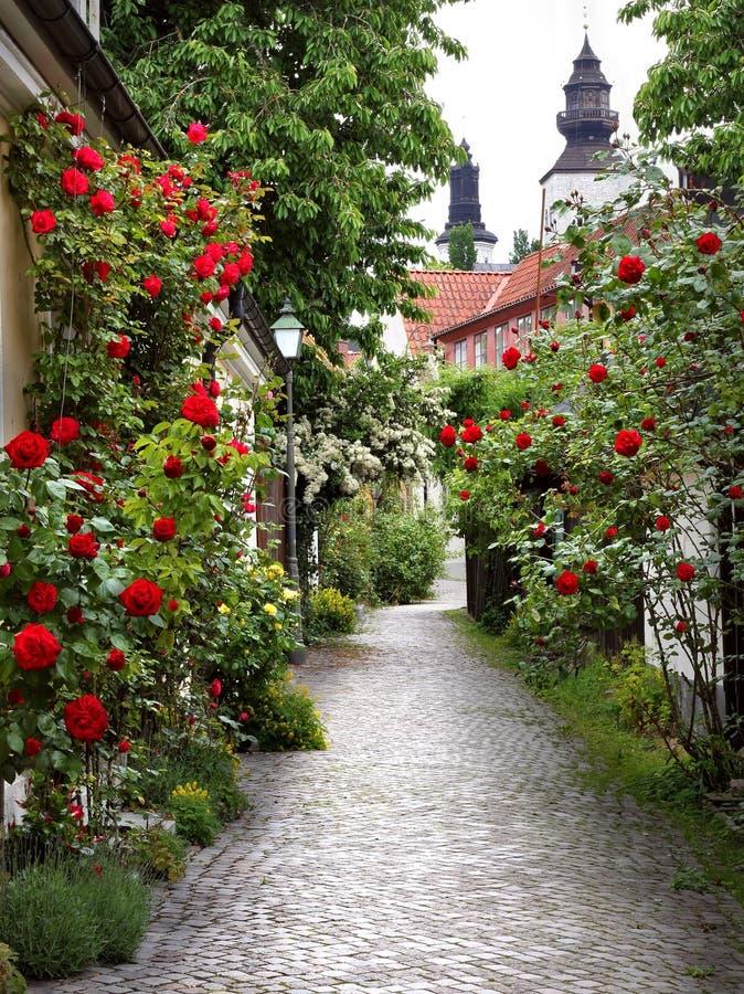 Callejón de rosas foto de archivo libre de regalías