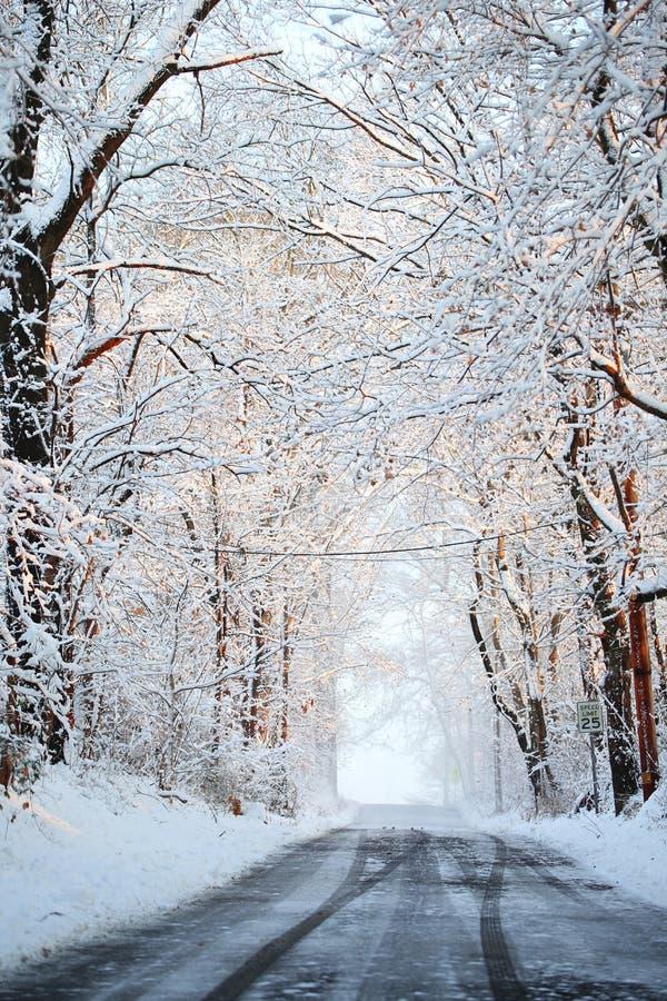 Callejón del invierno con los árboles nevados. imagen de archivo